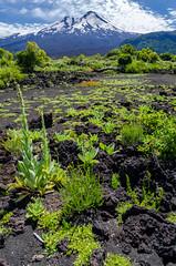 Volcano Llaima desde Laguna Verde, PN Conguillío