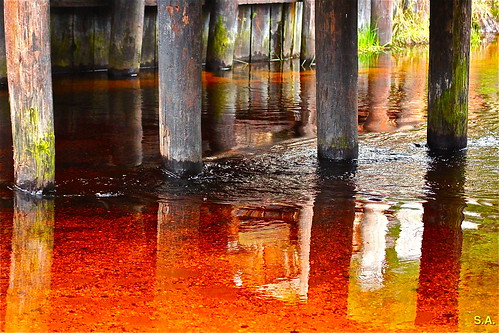 Cedar Water Nj Bayville The Red Water Is Caused By The