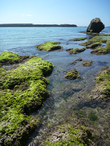 middle island rock shelf rock pool 1240153 | by gervo1865_2 - LJ Gervasoni