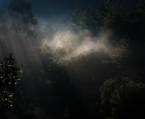 Misty morning in the Algarve hills | by Louis Dobson (formerly acampm1)