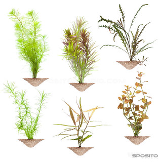 Plantas Aquabase | by SpositoStudio