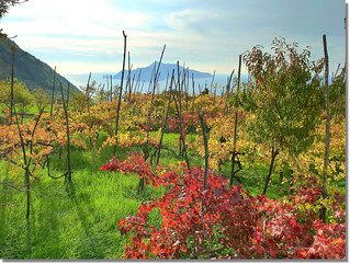 autumn in the vineyards facing Capri | by jjamv