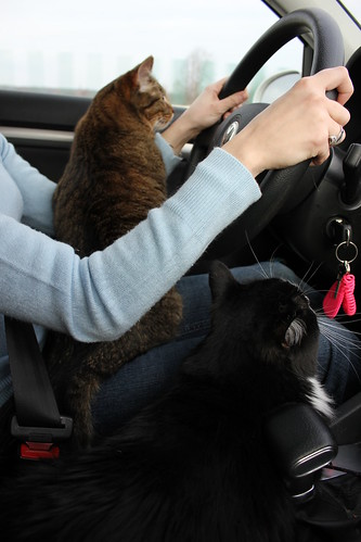 cats in car 2 cats riding in car rascon11 flickr. Black Bedroom Furniture Sets. Home Design Ideas