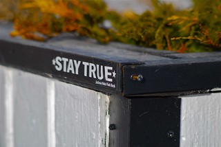 Stay True | by Elliot Paul Photography