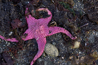 giant pink star | by fog and swell