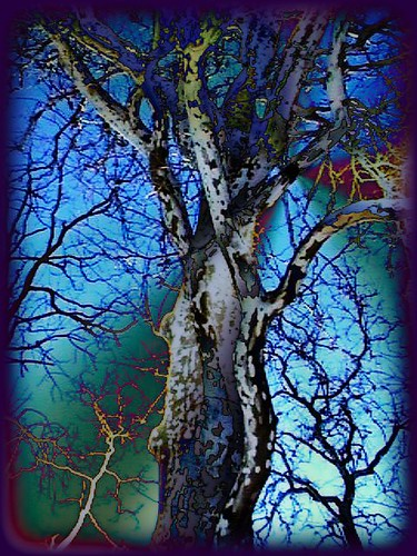 Sycamore tree, the magic hour | by sylkky2