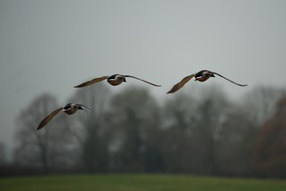 Winter flight | by elaine's life in images