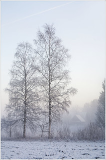 20120101. First day of the New Year. The fog. 1374. | by Tiina Gill (busy)
