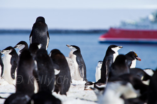 Antarctica-111122-142 | by Kelly Cheng