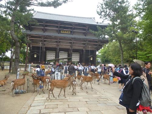 OB-jp16-Nara-Todai-ji (1)