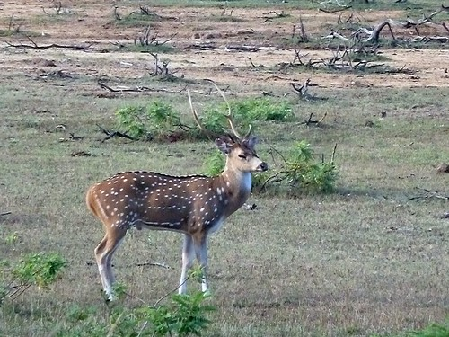 white deer hispanic singles 100% free online dating in white deer 1,500,000 daily active members.