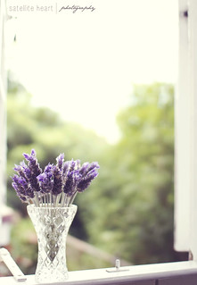 Lavender | by Bridie Murray