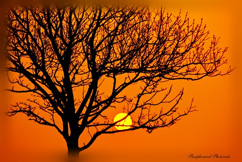IMGP7765001 sundown with tree | by Baspherical