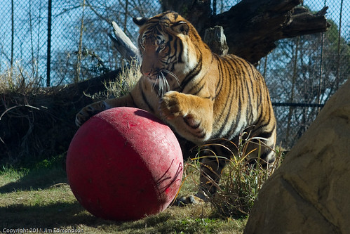 Tiger Ball | by Juggler Jim