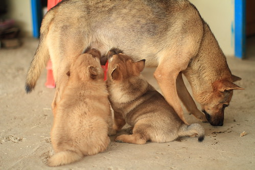 A Dog Family | by llee_wu