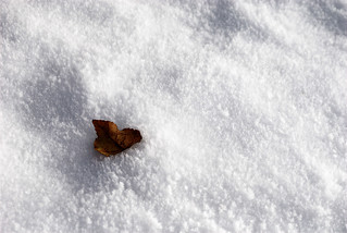 Autumn's leaf on Winter's snow | by Danology