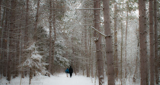 Images of Winter - A Sense of Scale -  Jack Pine Trail | by Beth Walsh Photography