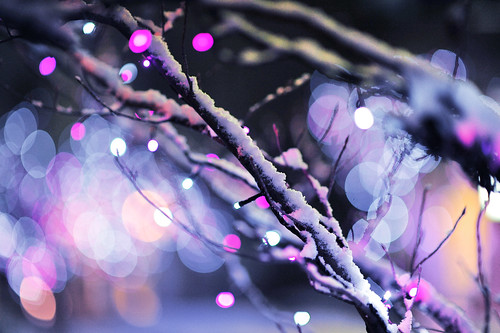Snow on Branches。© Glenn Waters. 23,000. visits to this photo.   Thank you. | by Glenn Waters ぐれんin Japan.