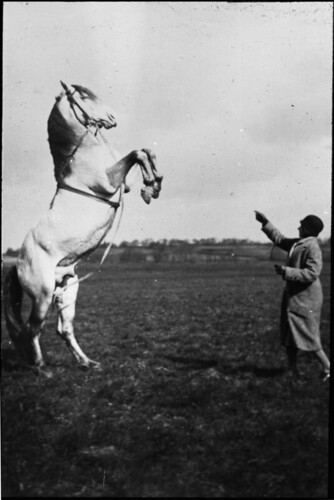 Standing horse | by Tyne & Wear Archives & Museums