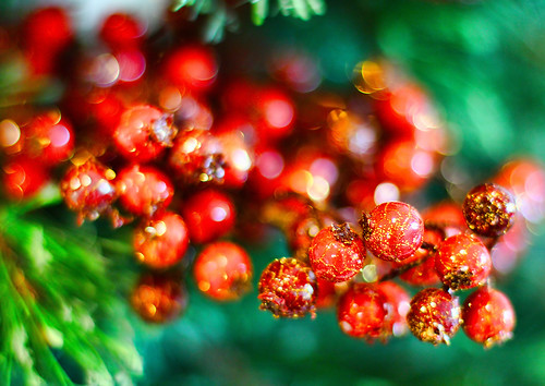 Holly Holidays | by trioptikmal