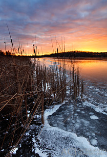 Taking Hold - Long Lake (Kettle Moraine State Forest - Northern Unit) | by Aaron C. Jors