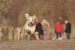 Flying dog (Einstein) | by Hans Surfer (where the action is)