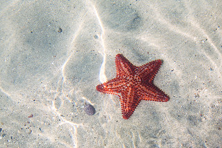 Starfish under water | by matteocolombo.com