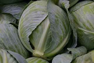 Cabbage! | by judo_dad1953