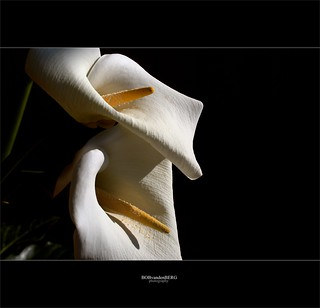 white on black.... | by Zino2009 (bob van den berg)