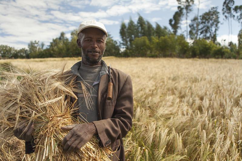 Gosaye - barley farmer- Ethiopia