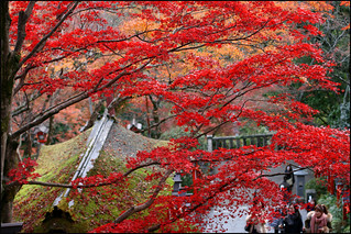 autumn red in japan | by aloalo*