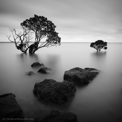 Tenby Mangroves 9 | by rossipenburg