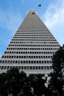 Transamerica Pigeons March 10 | by battyward