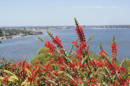 Feather flowers with the view to Swan river in Perth | by Tatters ❀
