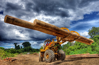 DSC04835 - Caterpillar 966C Carrying Tropical Tree Logs | by loupiote (Old Skool) pro