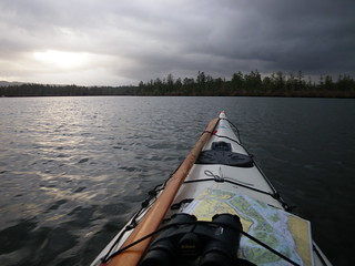 Christmas bird count by kayak | by red alder ranch