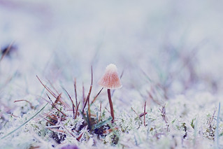 magie d'hiver | by Lena Sachse