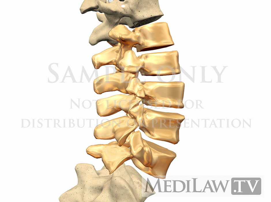 Physiotherapy Images Lumbar Vertebrae Anatomy 02 Lumbar An Flickr
