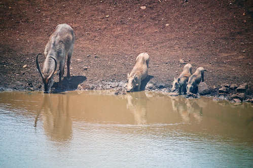 At the waterhole | by Richard+Rachel