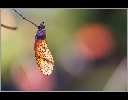 Seed pod -- Explored | by Corkneyfonz