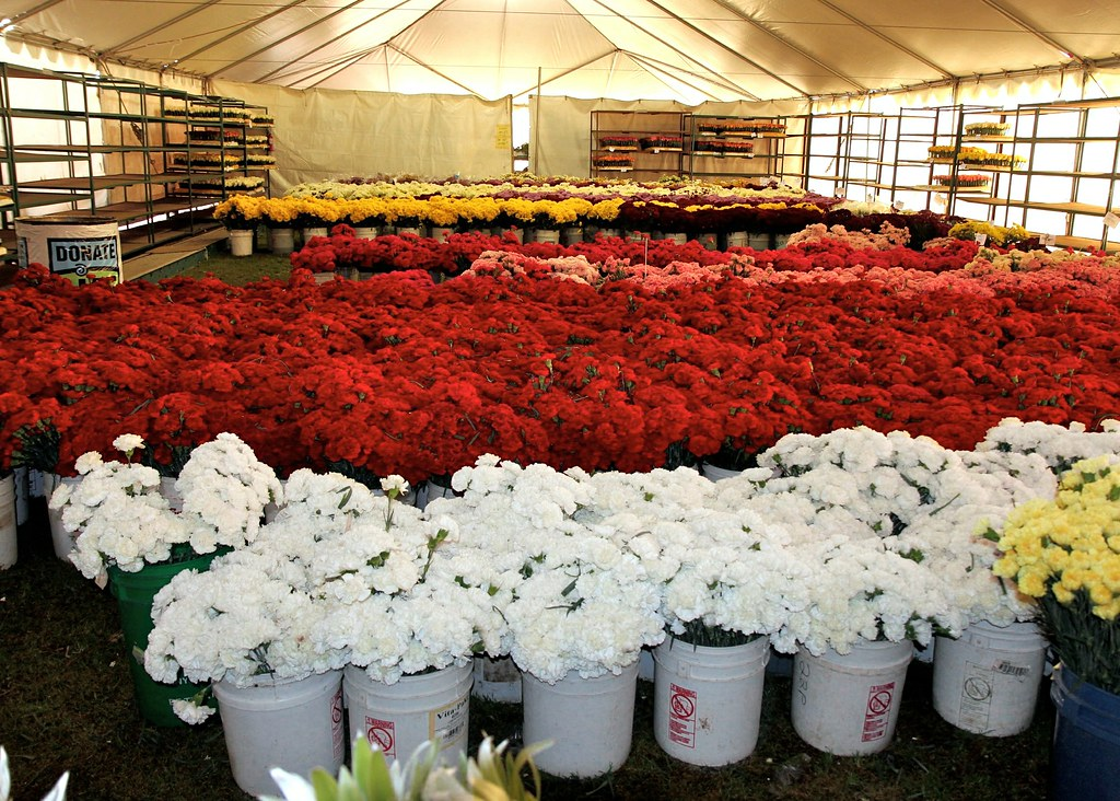 ... flower tent   by Karol Franks & flower tent   It wasnu0027t easy keeping the flowers fresh in ouu2026   Flickr