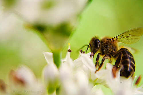 Pollination 3 | by rrikesh