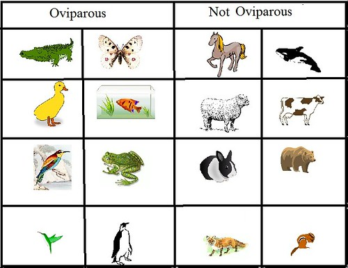 Oviparous and Non-Oviparous Animals | by Evelyn Saenz