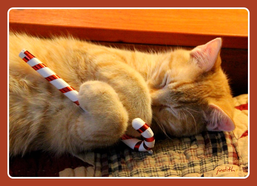 sweet Christmas dreams | Floydd is dreaming about all the li… | Flickr