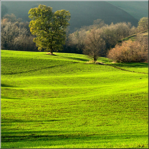 green scenery | by Luigi Alesi