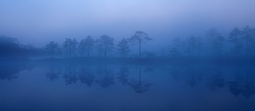 Blue morning | by Andrei Reinol