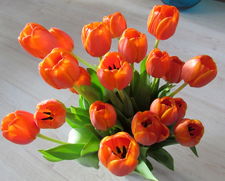the first tulips..... | by marcella2/tovje