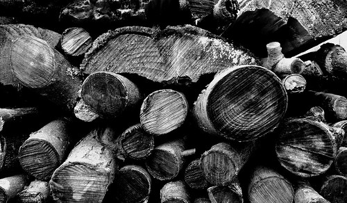 Wood pic of the day - black and white texture | by Leshaines123