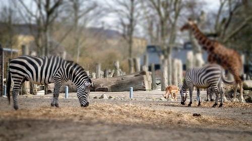 zoo-7 | by Frank Schmidt