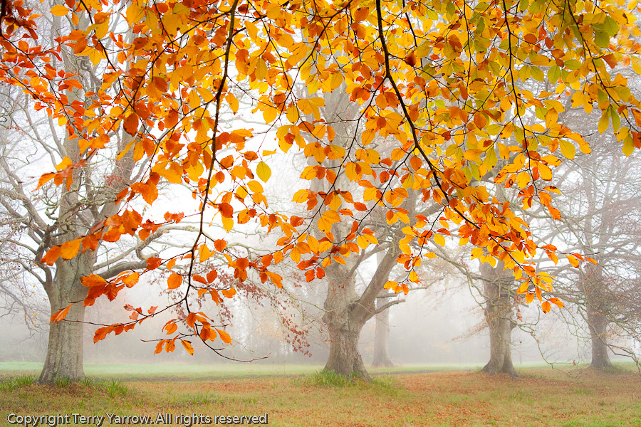 autumn season of mist and mellow fruitfulness